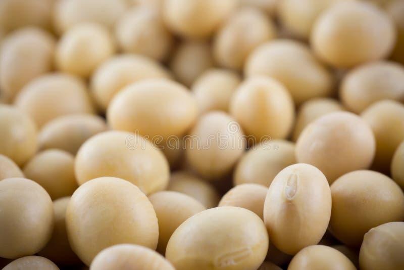 Soya bean royalty free stock photography