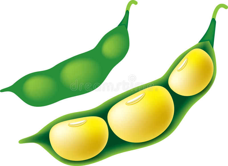 soya bean stock illustration illustration of clipart 92437042 rh dreamstime com