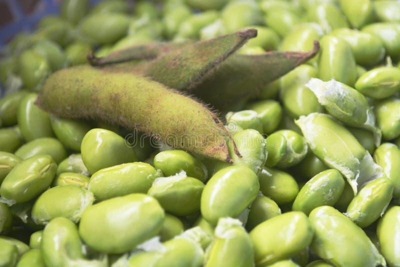 soybean arkivfoto