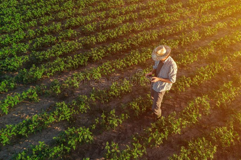 Soybean farmer with drone remote controller in field royalty free stock photo