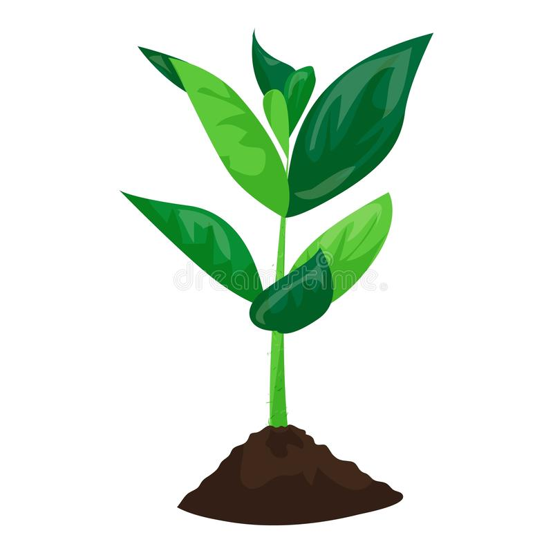 Soybean plant in ground icon, cartoon style vector illustration