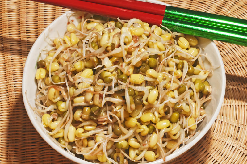 Download Soybean sprout stock photo. Image of asian, ingredient - 23524626