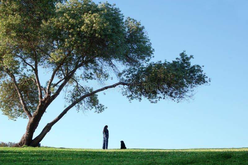 Sozinho sob a árvore grande fotografia de stock royalty free