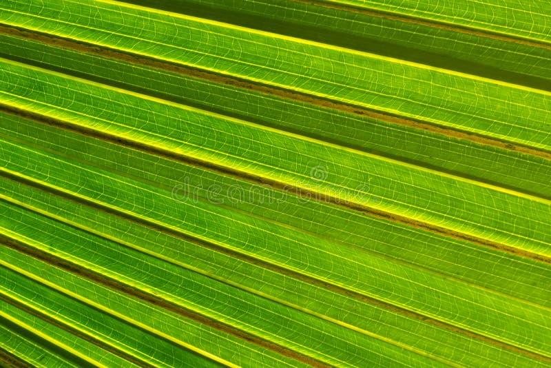 Spód Palmowy liść zdjęcie royalty free