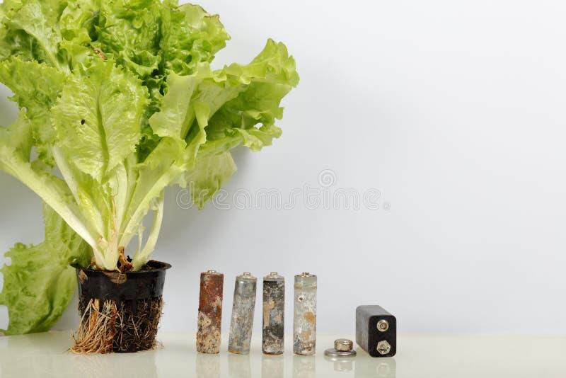 Spędzone baterie i zielony sałaty dorośnięcie w garnku Przetwarzać jałowe baterie na rowerze ekologicznej energii & oznaczają org fotografia royalty free