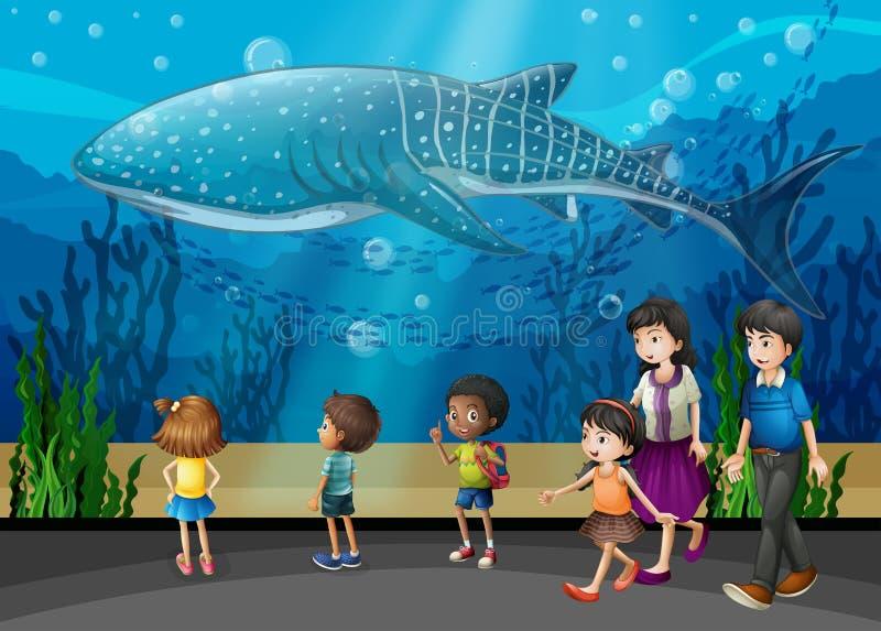 Späckhuggare i akvariet royaltyfri illustrationer