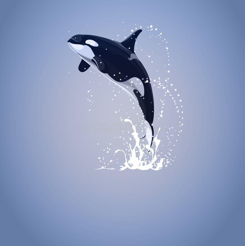 Späckhuggare som hoppar ut från vatten (Orcinusspäckhuggare) royaltyfri illustrationer