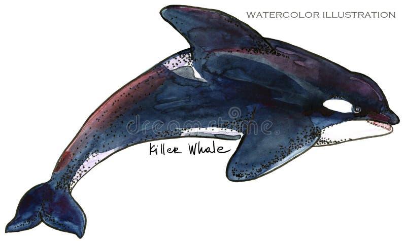 Späckhuggare som hoppar ut från vatten (Orcinusspäckhuggare) undervattens- livvattenfärgillustration colors härlig blur för djur  stock illustrationer