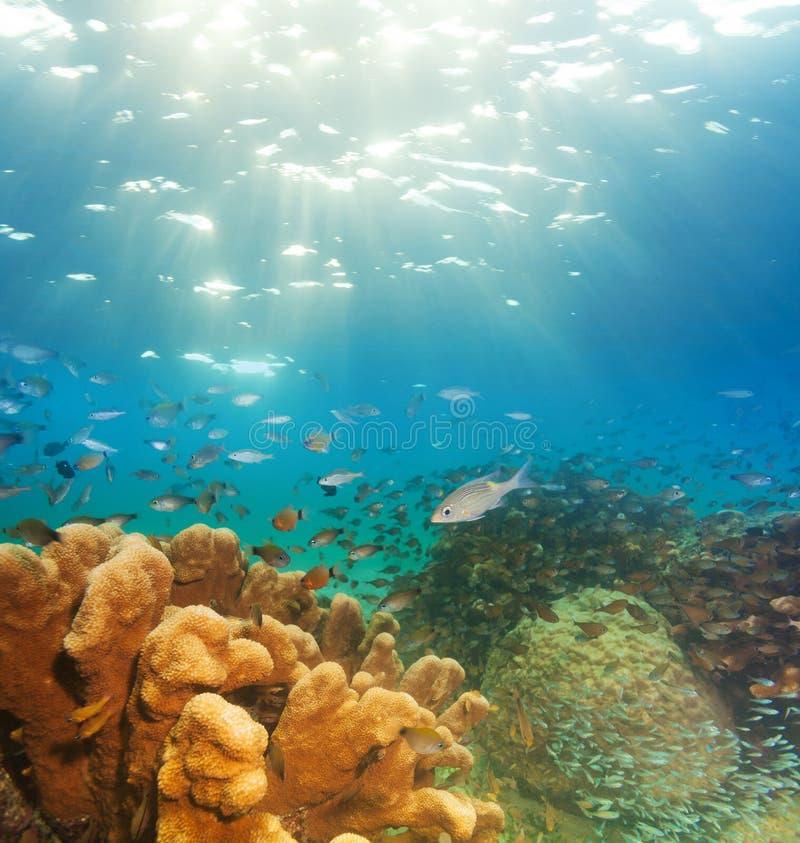 Spännande undervattens- panorama royaltyfria foton