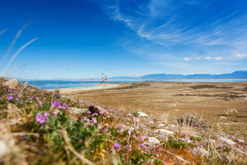 Spärliche Vegetation auf Seeufer von Great Salt Lake stockfotos