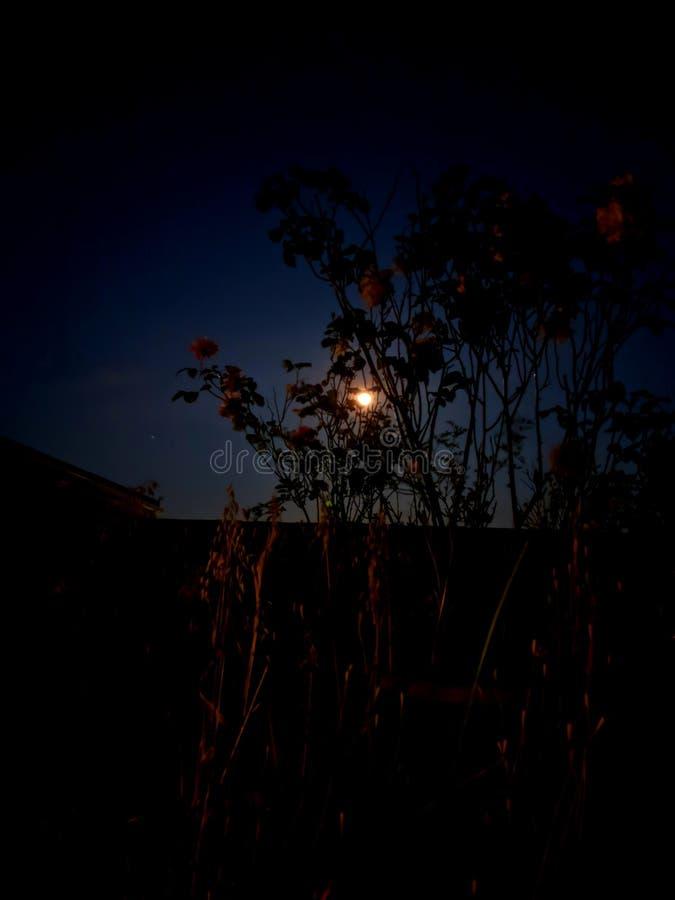 Spät- Fotografie mit dem Mond, den Blumen und den Niederlassungen lizenzfreie stockfotografie