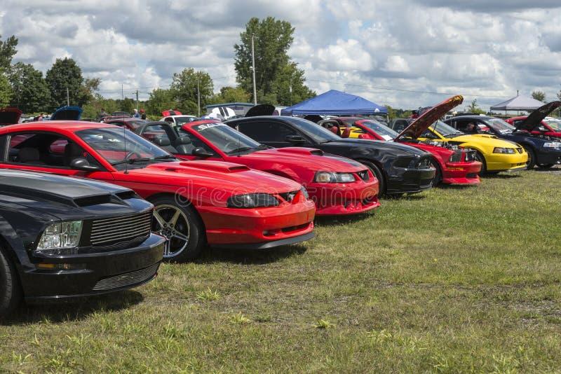 Späte vorbildliche Mustangshow stockbild