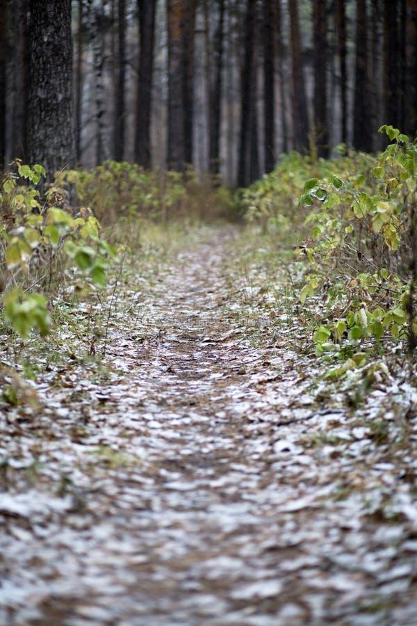 Spätherbst im Wald stockfotos