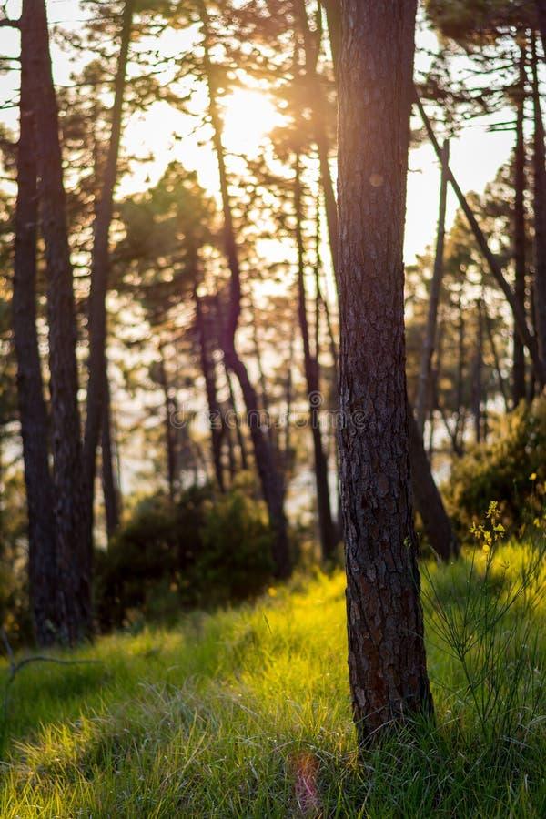 Spätholz stockfotos