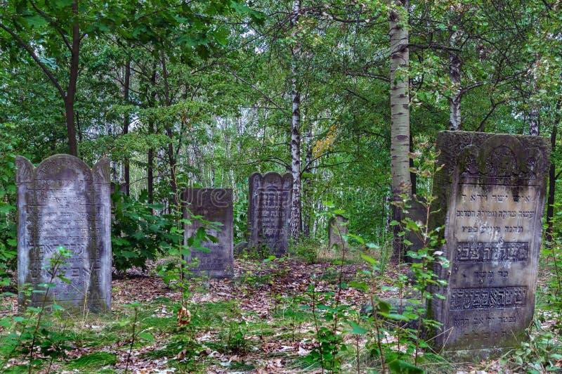 Spår av den judiska Warszawa - Brodno kyrkogård fotografering för bildbyråer
