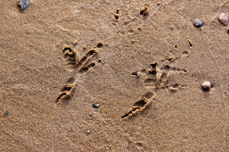 Spår av fåglar på den gula sandcloseupen arkivbilder