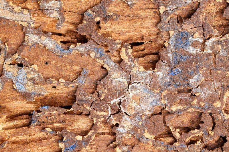 Spår av termit arkivfoto