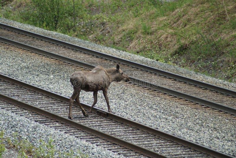 spår för järnväg för alaskabokorsälg arkivfoton