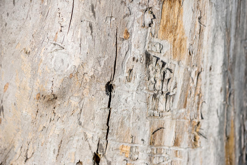 Spår från termit royaltyfri foto