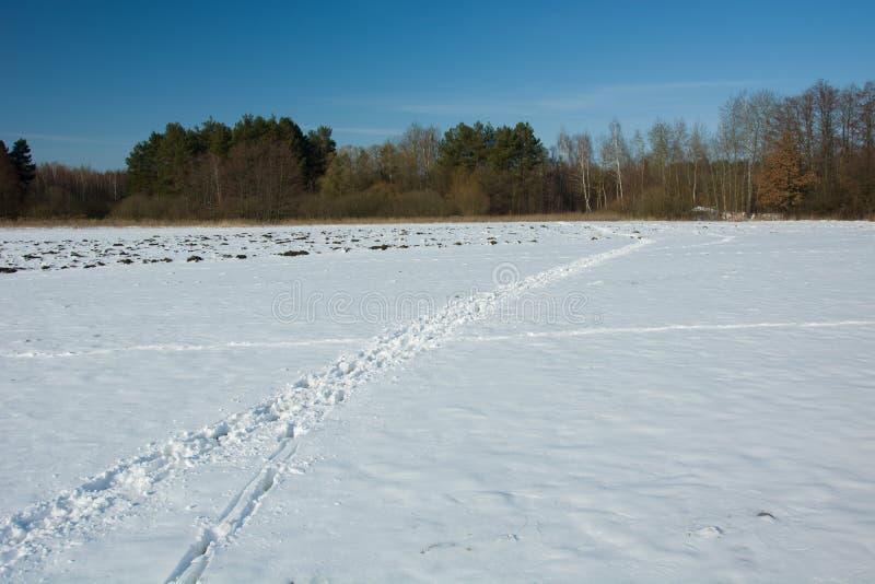 Spårar av djur på snö och skog arkivbild