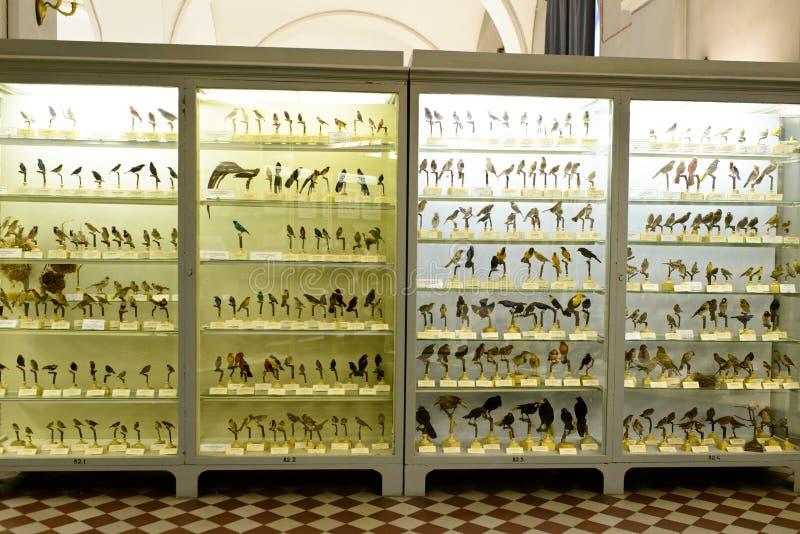Spécimen des oiseaux divers photo stock