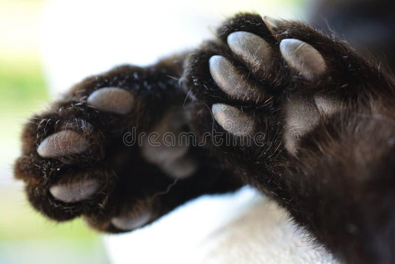 Spód kot łapy, makro- zdjęcia stock