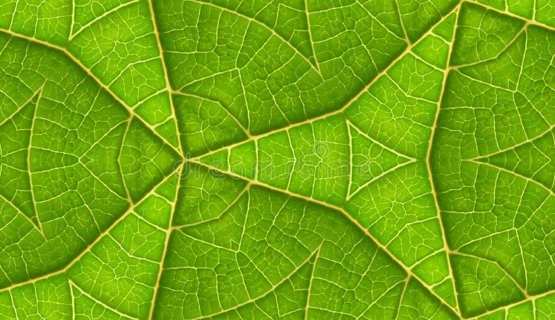 Spód Zielonego Liść Bezszwowy Dachówkowy Tło obrazy royalty free