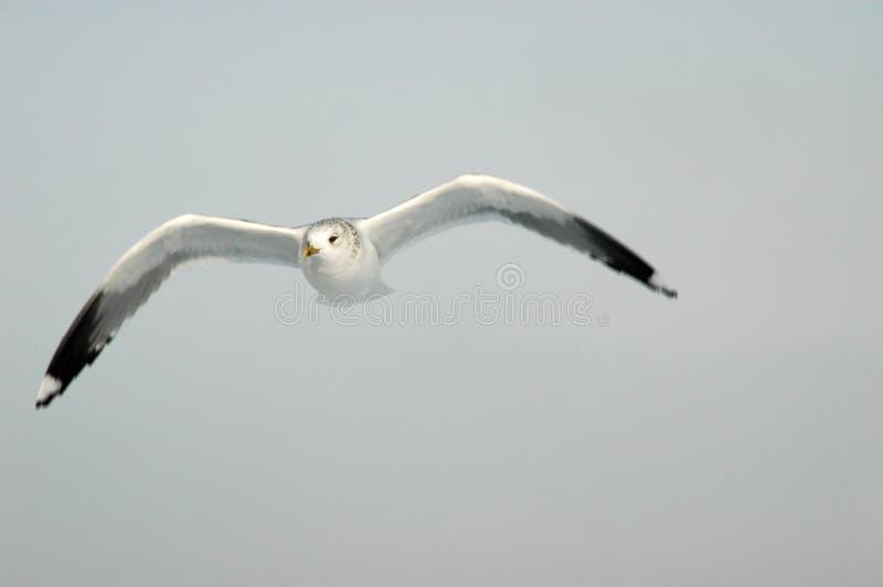 spójrz na moje skrzydeł obrazy stock
