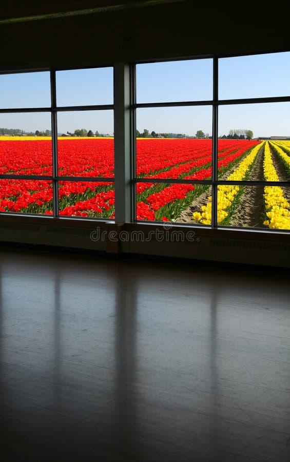 spójrz przez okno zdjęcie royalty free