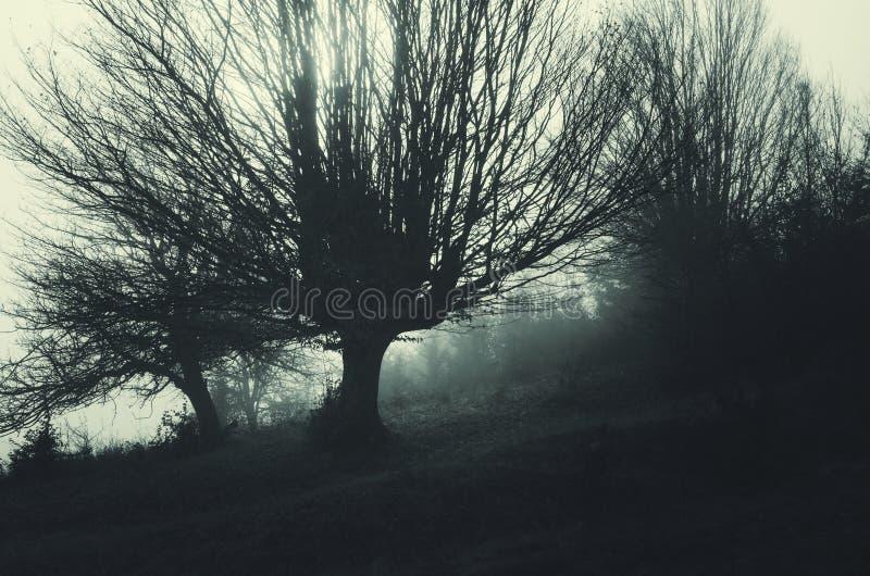 Spökad äng med mörka träd arkivbild