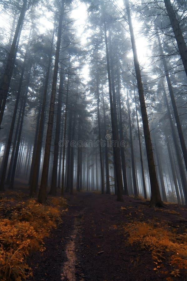 spökad skog royaltyfria foton