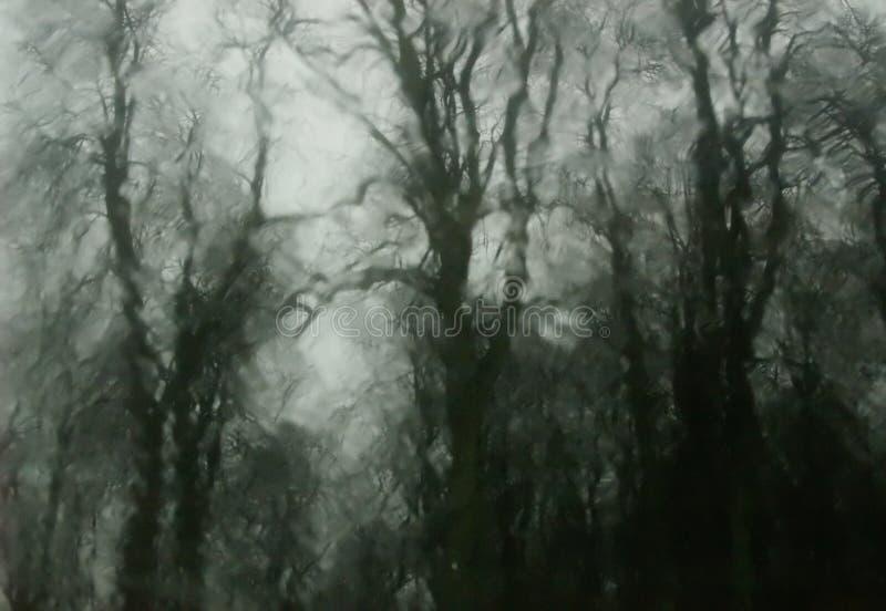 spökade trän royaltyfri fotografi
