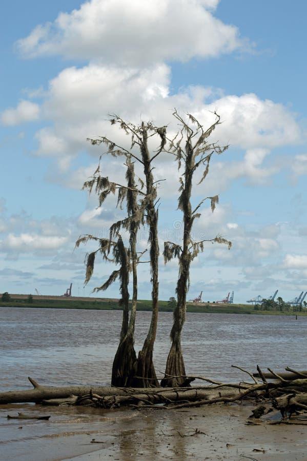Spökat träd på uddeskräckfloden royaltyfri fotografi