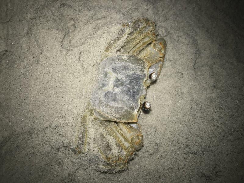 Spökehastiga greppet försöker att dölja i sanden royaltyfri bild