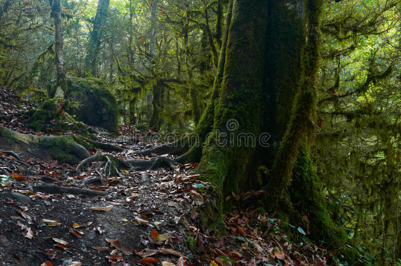 Spöklik halloween mossig skog royaltyfri bild