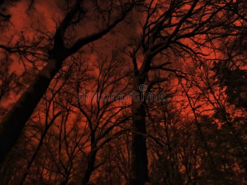 spöklik skog arkivbild