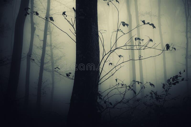 Spöklik skog med trädet på natten arkivbilder
