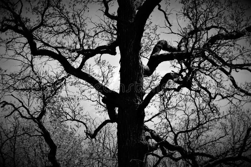 spöklik tree arkivbild