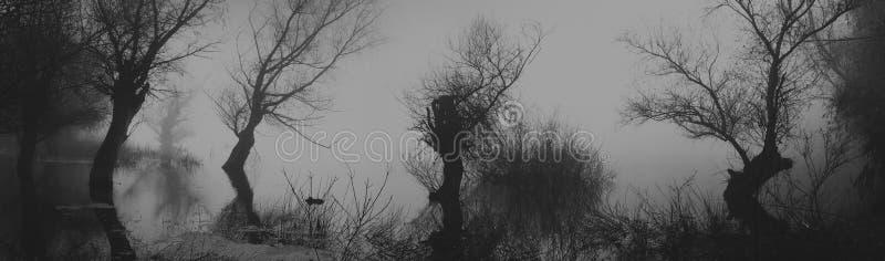 Spöklika mörka träd för od för landskapvisningkonturer i träsket arkivfoton