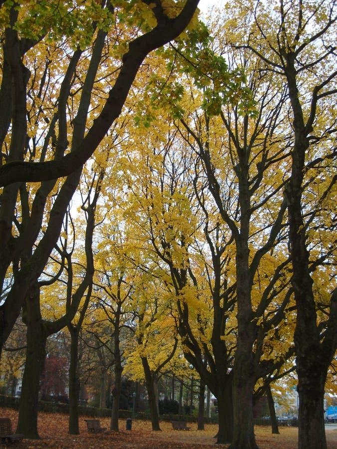 spöklika trees royaltyfri foto