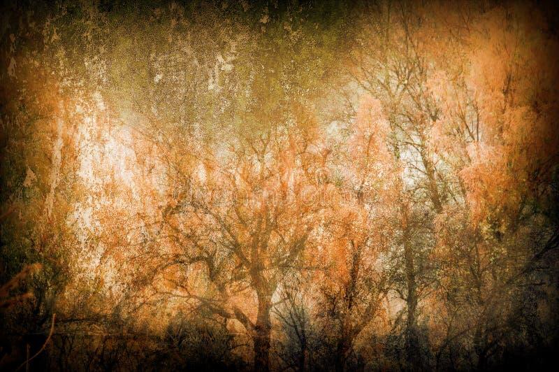 spöklika trees för konstbakgrundsgrunge fotografering för bildbyråer