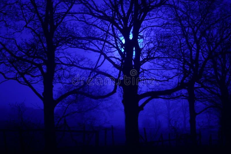 Download Spöklika trees för natt arkivfoto. Bild av kusligt, spöklikt - 45892