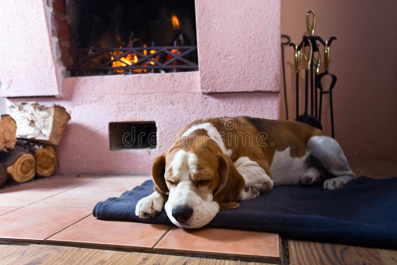 Spürhund auf dem Boden nahe dem alten Kamin lizenzfreie stockbilder