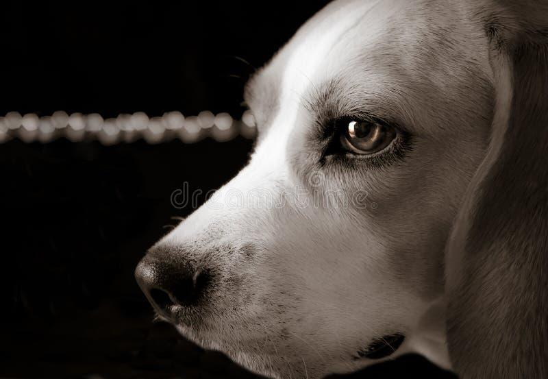 Spürhund mit Lichtern stockbild