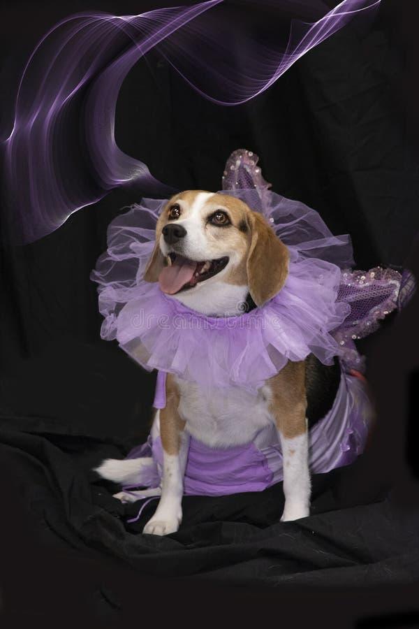 Spürhund verkleidet als Fee stockbilder