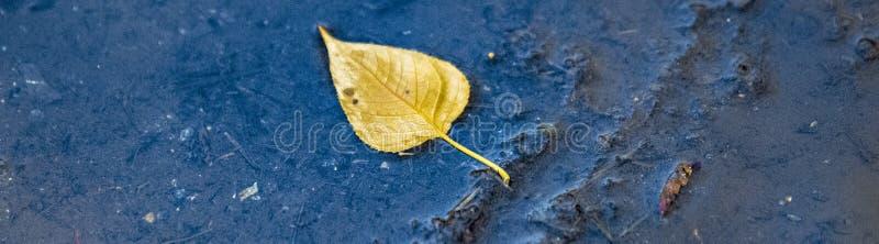 Spławowy Żółty liść obraz royalty free