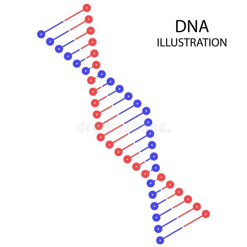Spaß-DNA-Vektorillustration stock abbildung