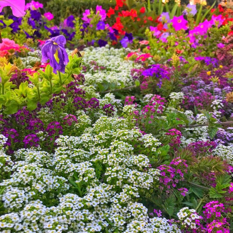 Spać kwiaty obraz royalty free