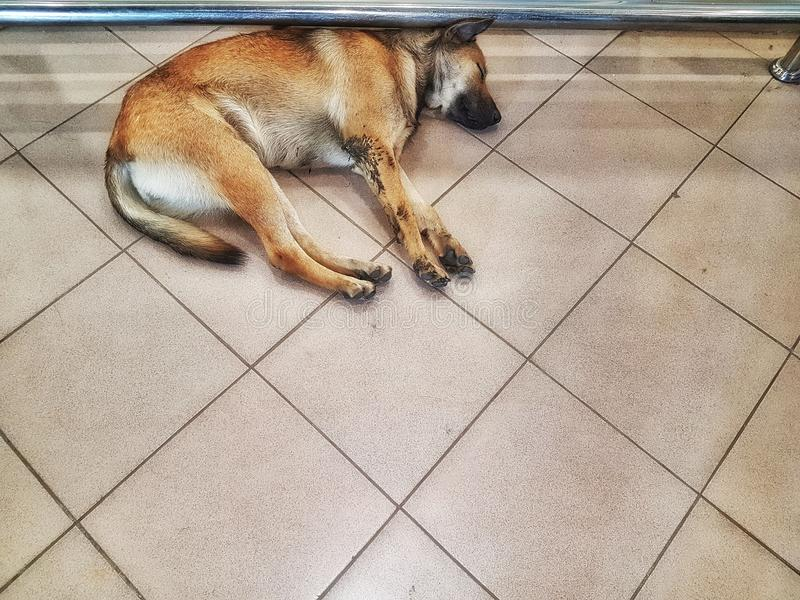Spać psy fotografia stock