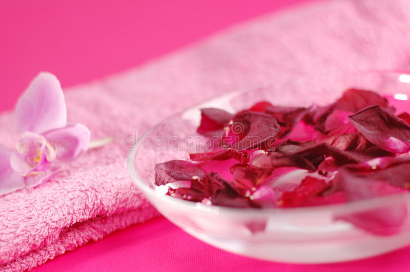 Spa. Fresh petals of flowers on the pink background royalty free stock image
